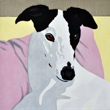 Kate, portrait of a Greyhound - 7