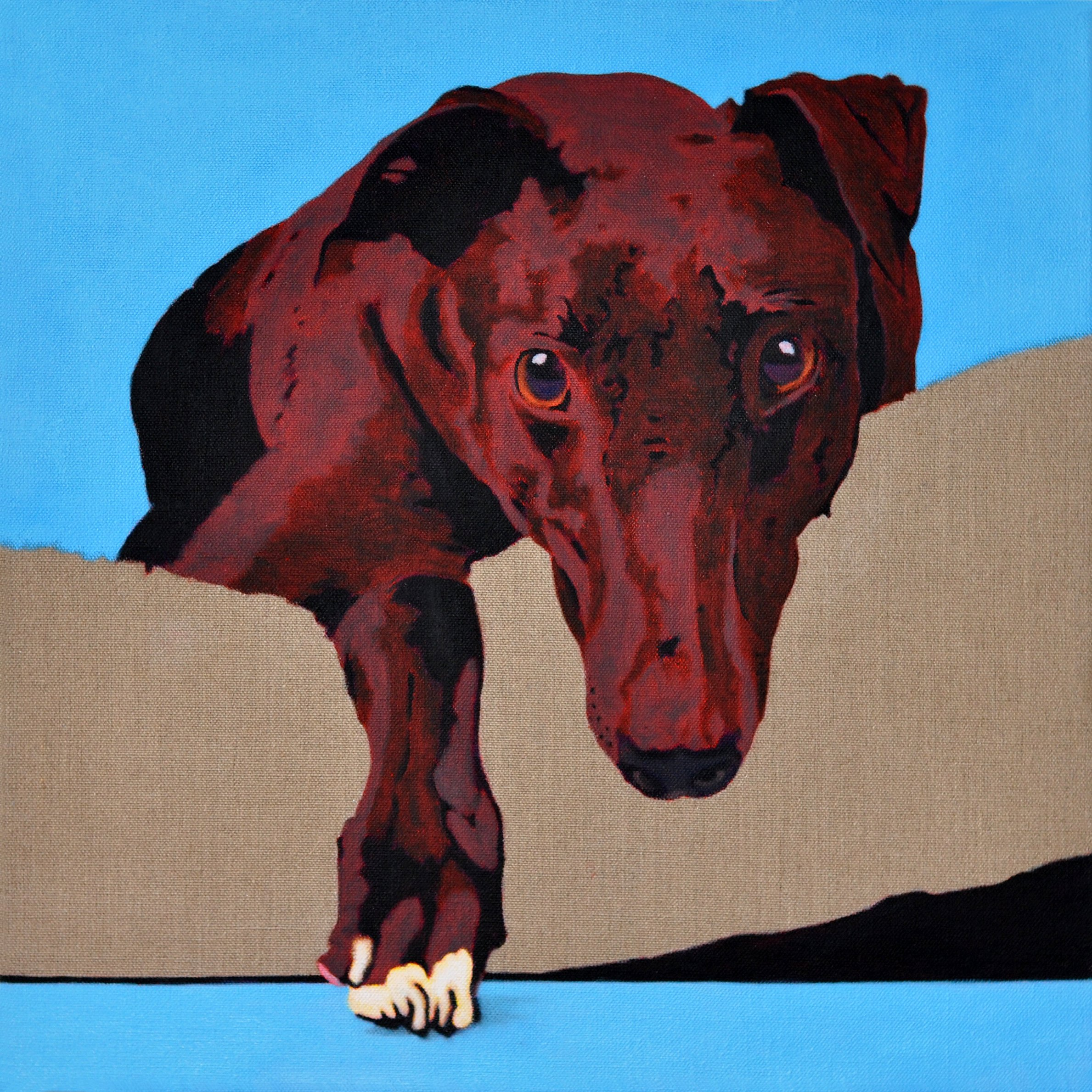 White Paw, portrait of a Greyhound - 6